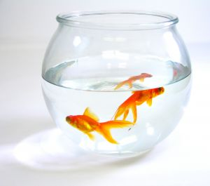Fish are going to take over the world