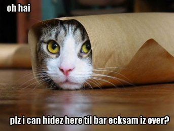Cat scared of bar exam