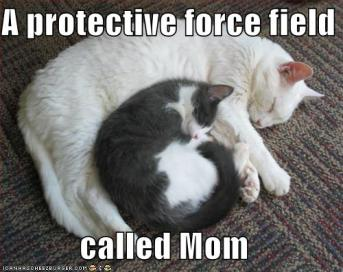 Mother's Day lolcat